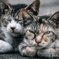 猫の信頼関係
