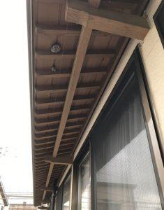 軒下、アシナガバチ