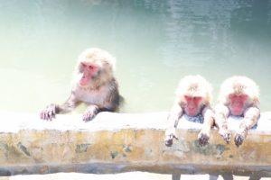 サルのお風呂