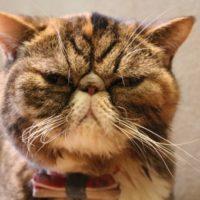 起こった猫