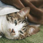 catgetup