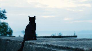 waitingcat
